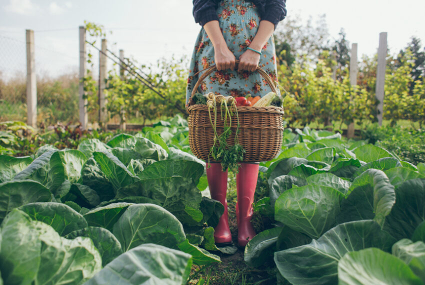 Gardening Can Improve Your Mental Health—Here's How To Do It for Free