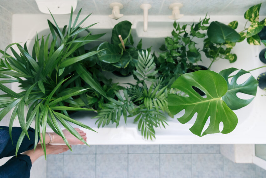 This 'Bottom-Up' Hack Makes It Impossible To Overwater Your Plants