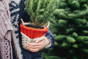 How To Keep Your Tabletop Christmas Tree Looking Truly Evergreen All Year Round