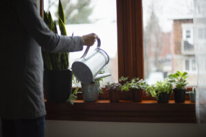 How To Turn Any Single-Use Plastic Container Into a Beautiful Eco-Friendly Planter