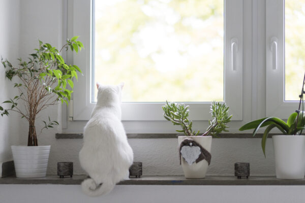Shop These Pet-Friendly House Plants To Keep You and Your Animals Happy
