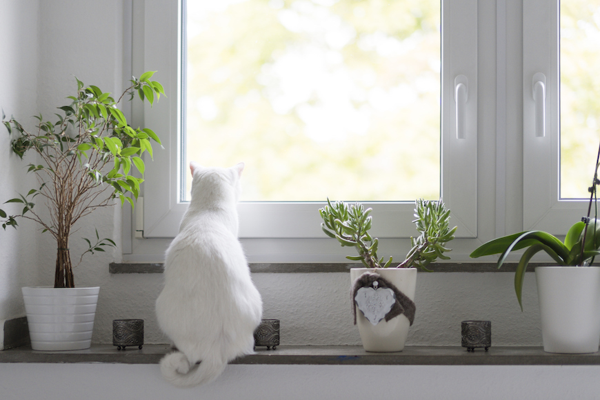 Thumbnail for Shop These Pet-Friendly House Plants To Keep You and Your Animals Happy