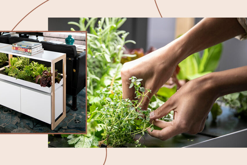 This In-Home Smart Garden Brought Me Joy (and Vegetables!) in a Chaotic Year
