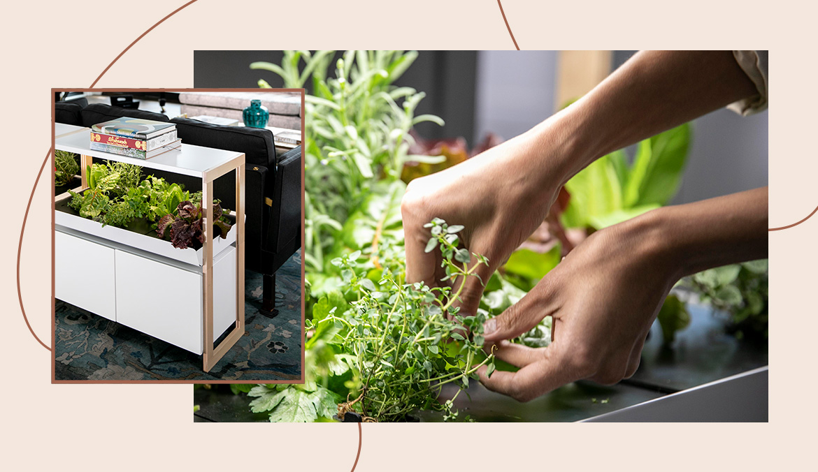 Thumbnail for This In-Home Smart Garden Brought Me Joy (and Vegetables!) in a Chaotic Year