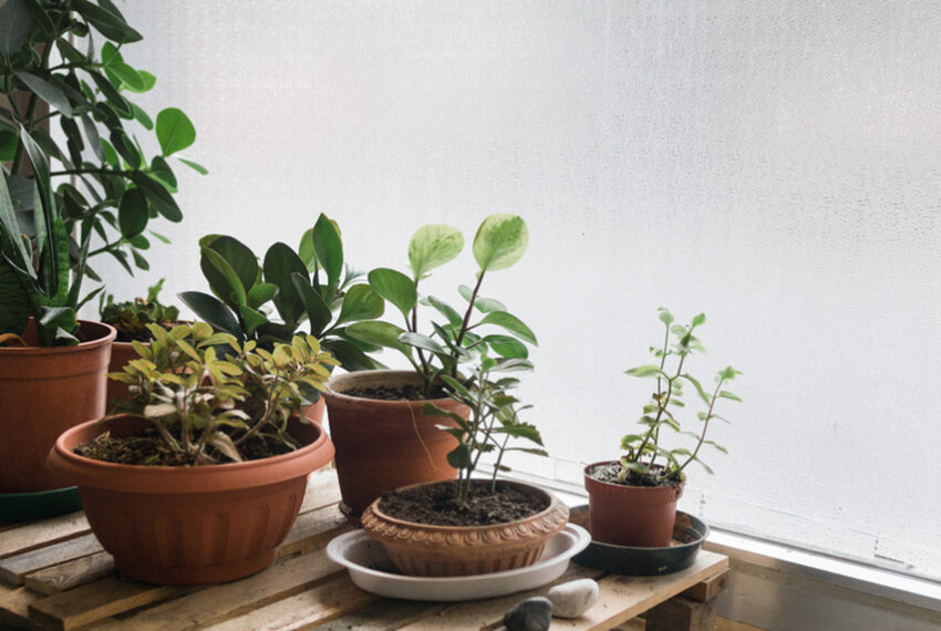 5 Beautiful Indoor Plants That'll Thrive Throughout Winter