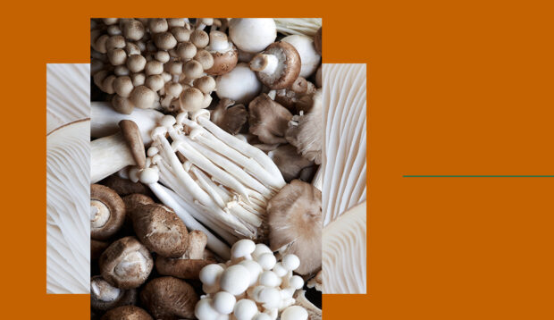 Adaptogenic 'Shrooms Will Enjoy Even More Function in 2021