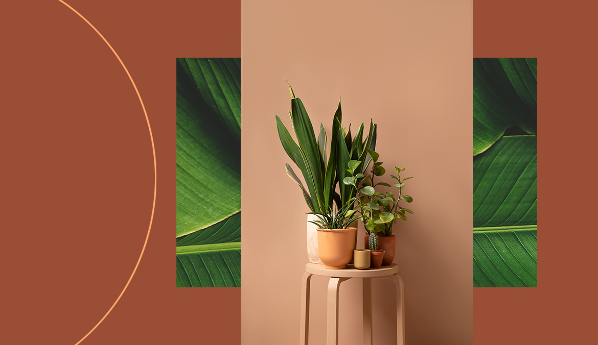 Thumbnail for Our Indoor Spaces Will Go Green—Literally