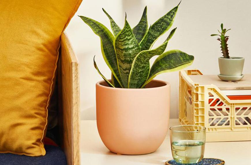 indoor winter plants