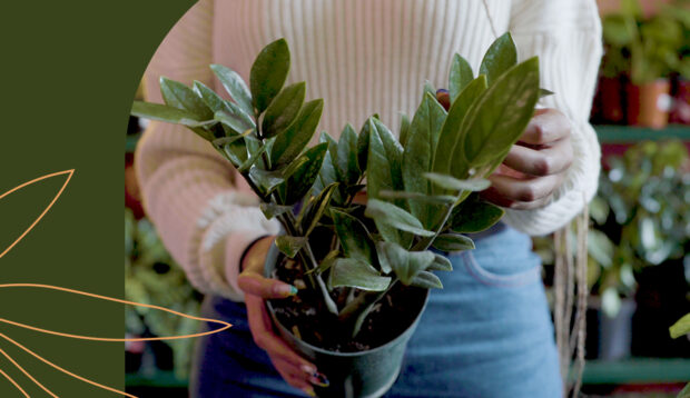 4 Low-Light Plants To Give Family, Friends, and Maybe Yourself