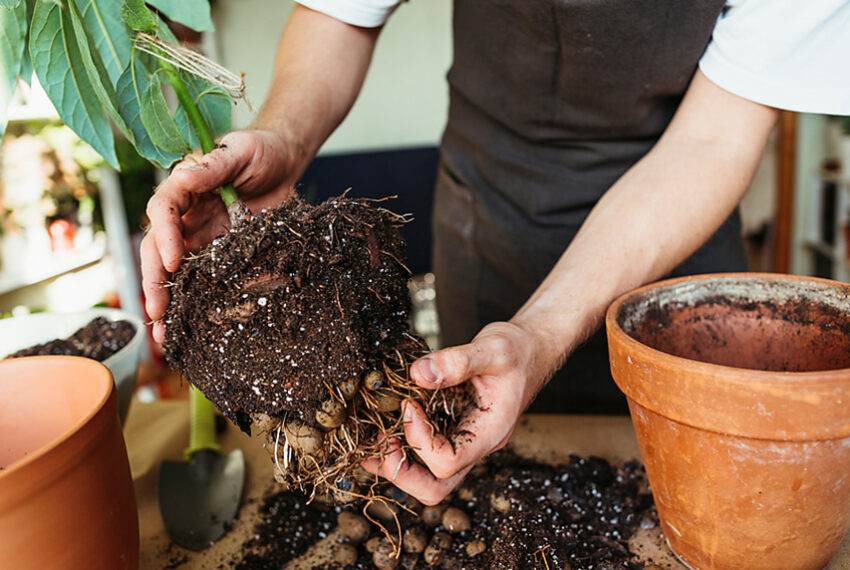 4 Most Overlooked Signs It's Time To Repot Your Plants