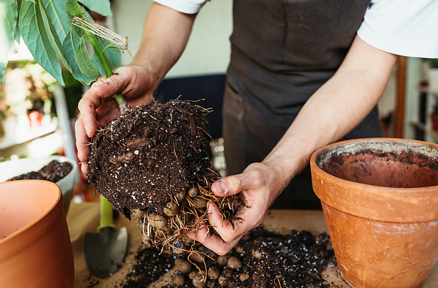 Thumbnail for 4 Most Overlooked Signs It's Time To Repot Your Plants