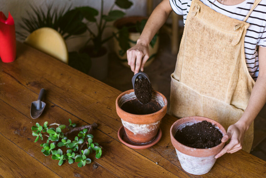 5 Easy Plants To Propagate in Soil—And Exactly How To Do It