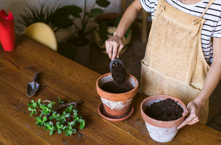 Thumbnail for 5 Easy Plants To Propagate in Soil—And Exactly How To Do It