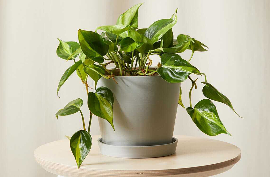 plant cuttings in soil