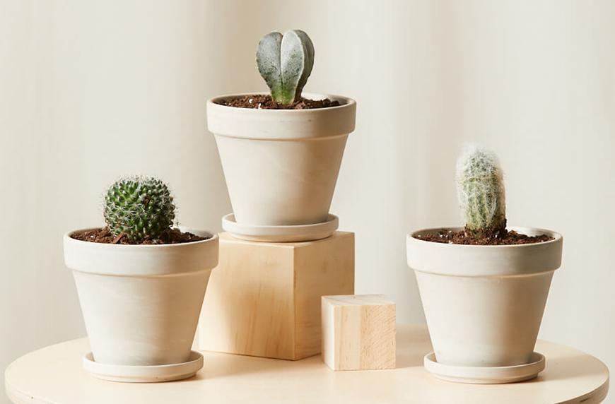 cactus winter care