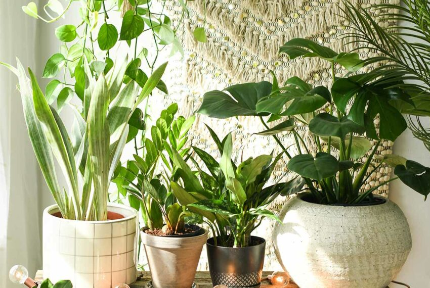 10 Stylish Planters That Give Your Plants a New Home for Less Than $30