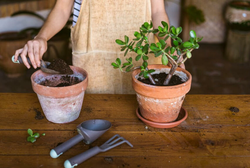 How To Choose the Best Soil for All Your Different Plants