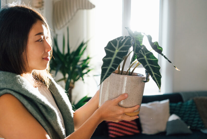 How To Transform a Simple IKEA Cabinet Into Your Tiny Personal Greenhouse