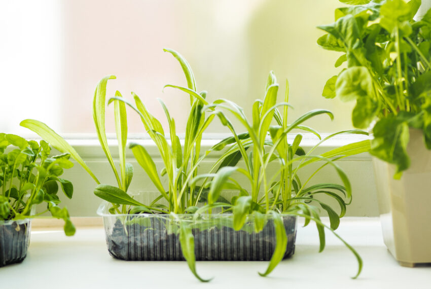 3 Mistakes You're Making With Your Windowsill Planter, According to a Professional Plant Mom