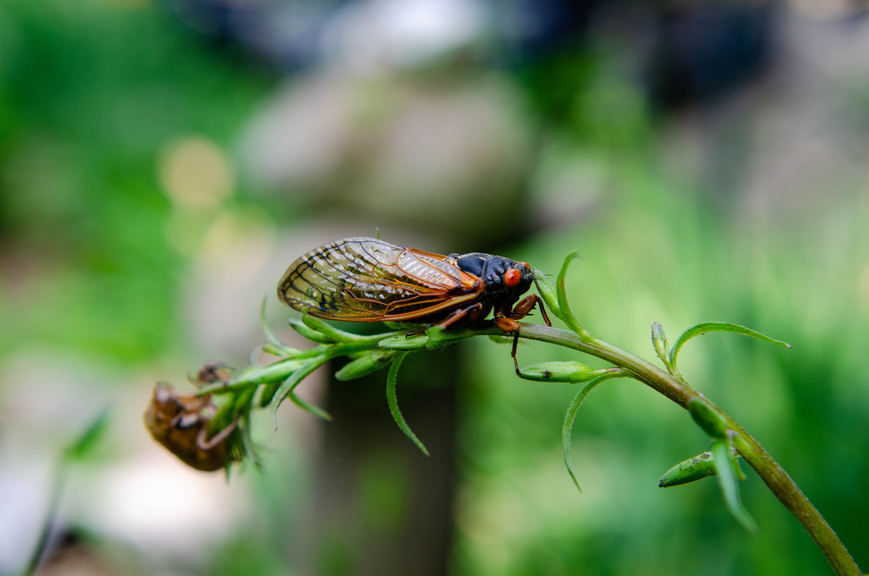 Thumbnail for How To Protect Your Garden From *Billions* of Cicadas