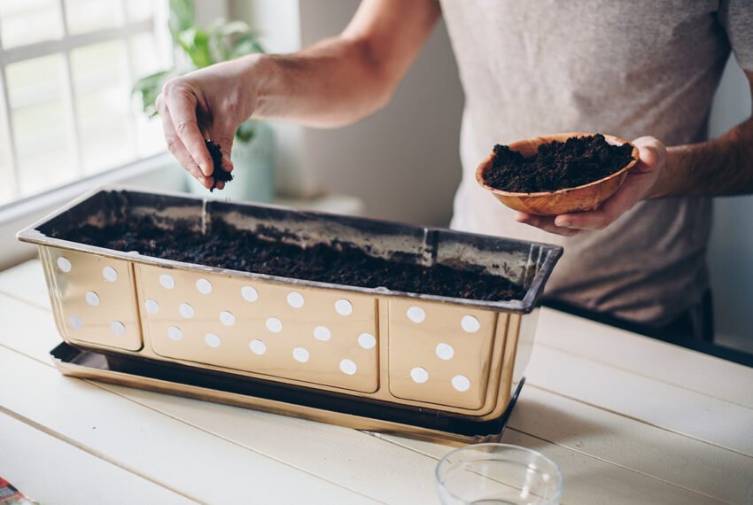 6 Indoor Herb and Plant Growers For Those With a Lack of Space and (Perhaps) a Lack of Green Thumb