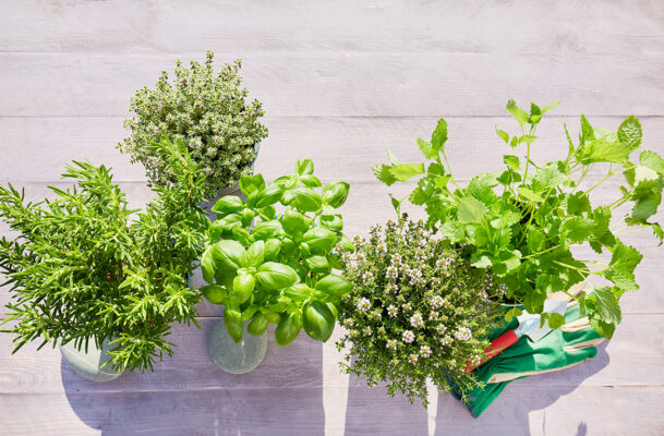 Can't Keep a Plant Alive? This 'Self-Watering Garden' Will Do All the Work for You