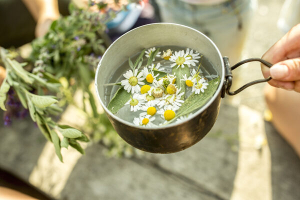 What To Grow in a Tea Garden of Fresh Herbs and Fragrant Flowers