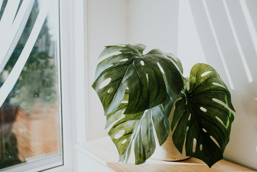 4 Signs Your Plant Is Begging for a Bigger Pot