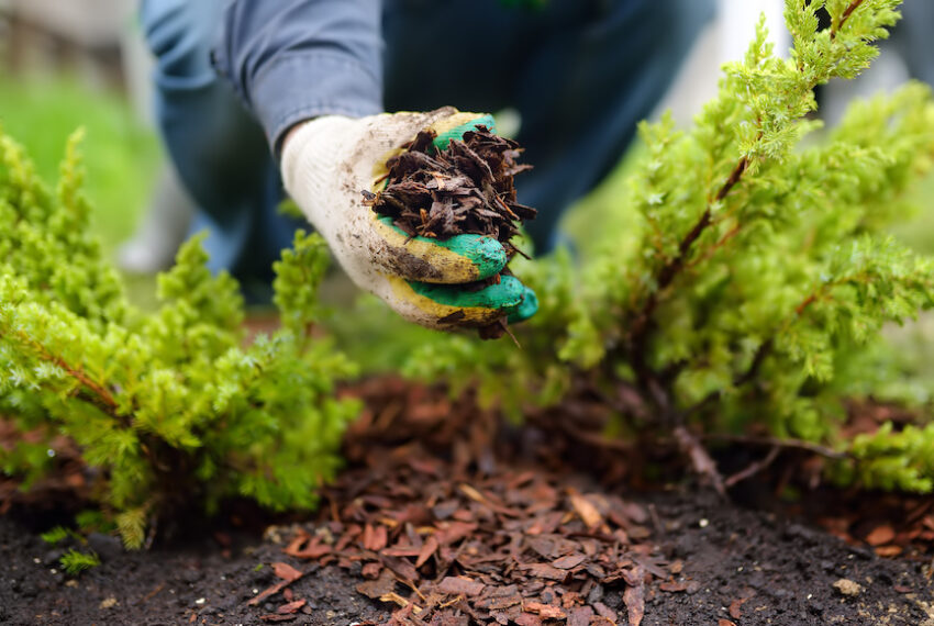 Layering Your Garden Like Lasagna Can Yield Better Results Without Digging or Weeding