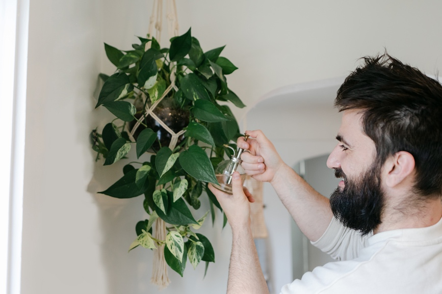 Thumbnail for 10 Indoor Hanging Plants To (Ahem) Elevate Your Home's Greenery