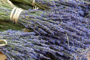 The 'Plant for Peace' Is a Common Herb Often Overlooked for Treating Stress