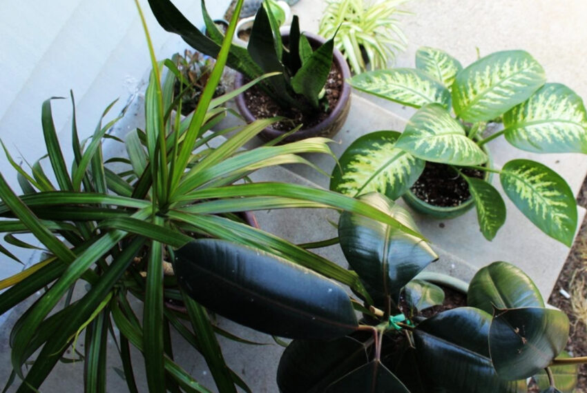 How Being a Plant Parent Makes Me Better With Relationships