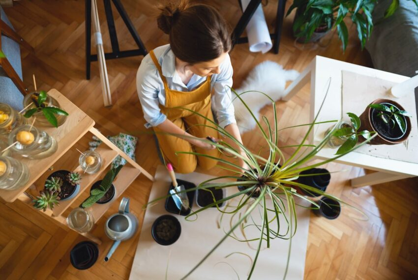 The 3-Tool 'Please Stay Alive' Kit You Need for Healthy Houseplants