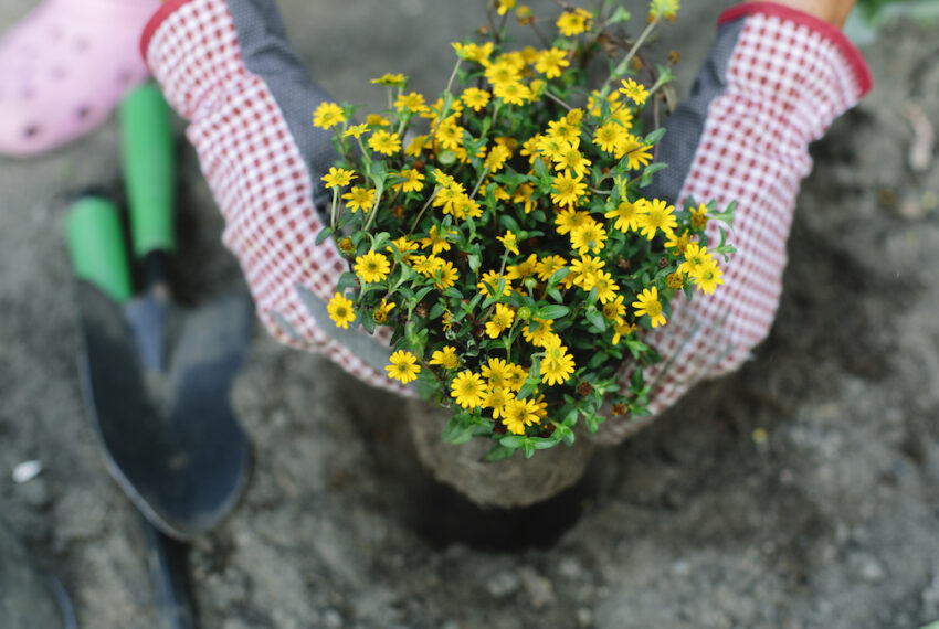 The 5 Quickest-Sprouting Flower Seeds to Plant, for When You Want Blooms ASAP