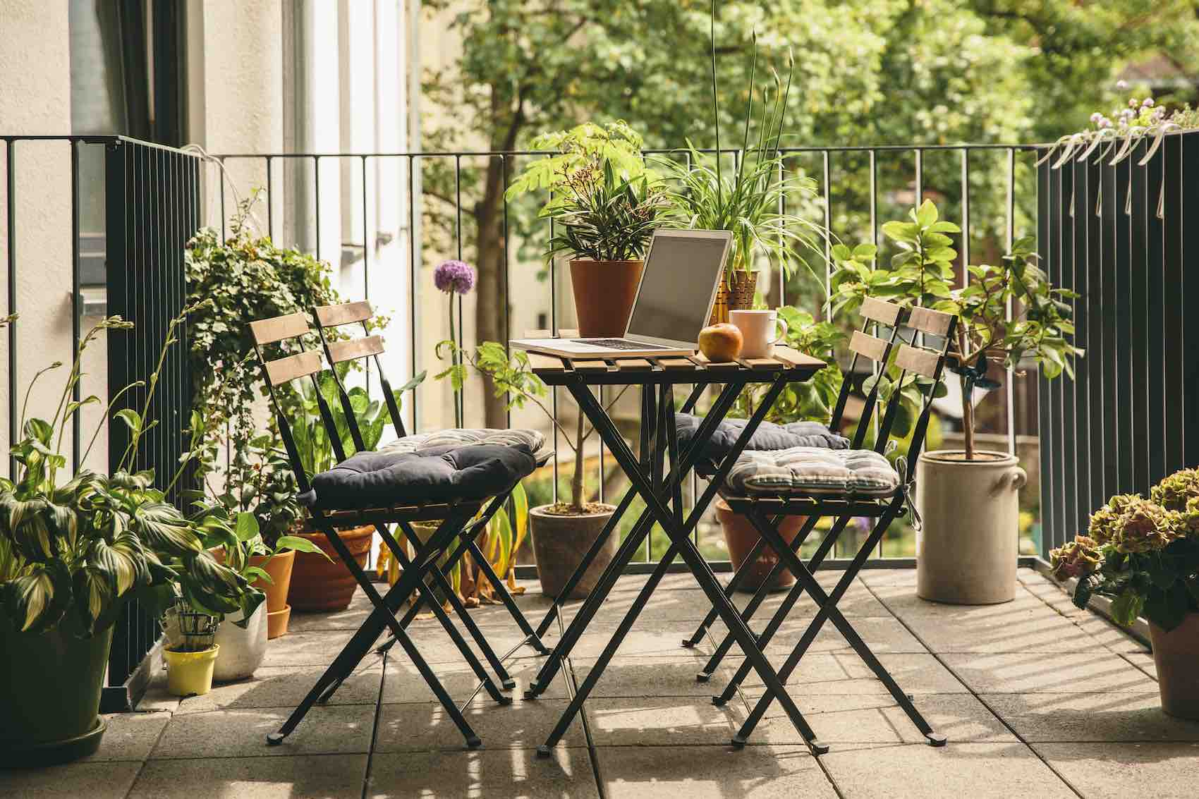 Thumbnail for 5 Indoor-Outdoor Plants That Love a Seasonal Change of Scenery