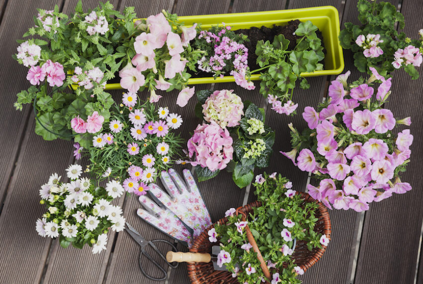 No Garden? No Problem—Here's How to Plant a Dazzling Window Box