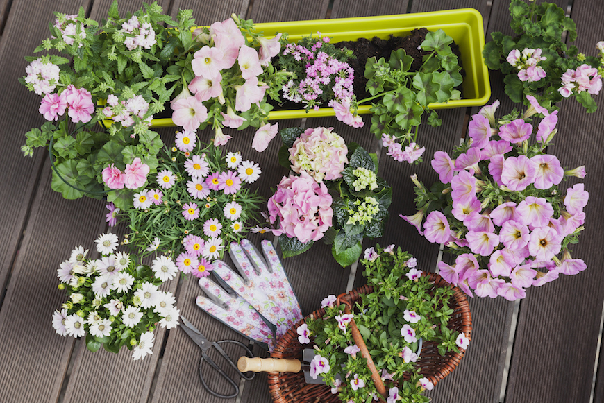 Thumbnail for No Garden? No Problem—Here's How to Plant a Dazzling Window Box