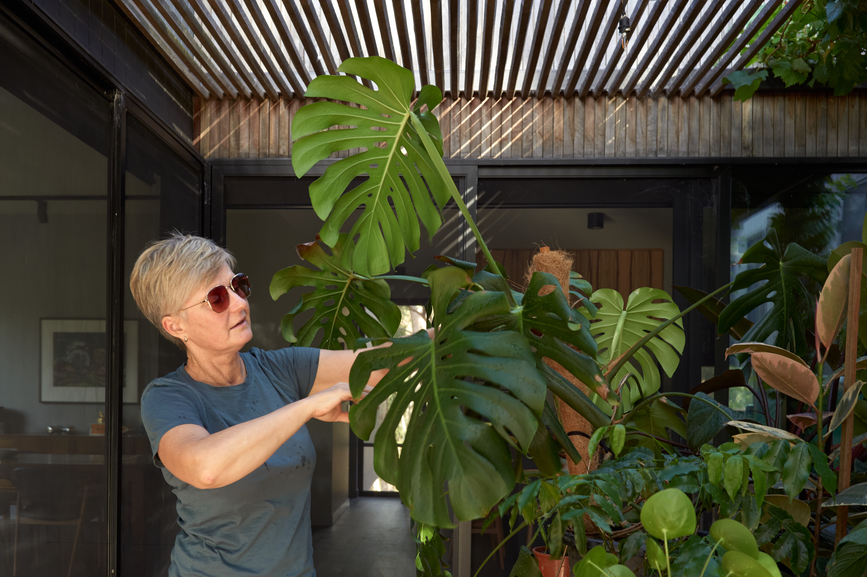 6 Signs Your Houseplant Is Infested With Deadly Pests | Well+Good