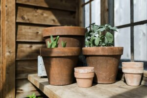 Skipping This Step With Your Terra Cotta Pots Could Be Drying Out Your New Plants