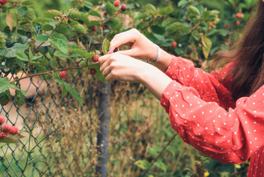 6 of the Easiest Fruits To Grow in Your Garden
