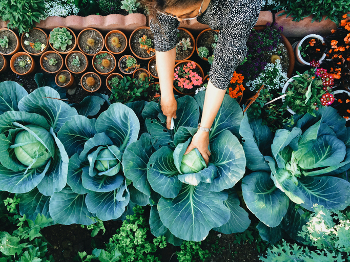 How to Practice Regenerative Agriculture in Your Own Home Garden