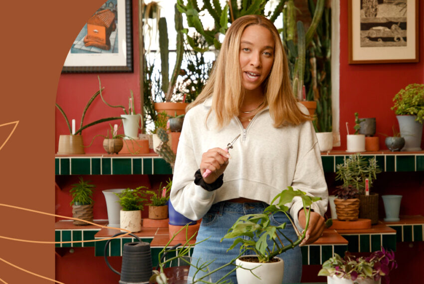 A Plant Doctor Explains How To Properly Propagate Your Plants Depending on the Type
