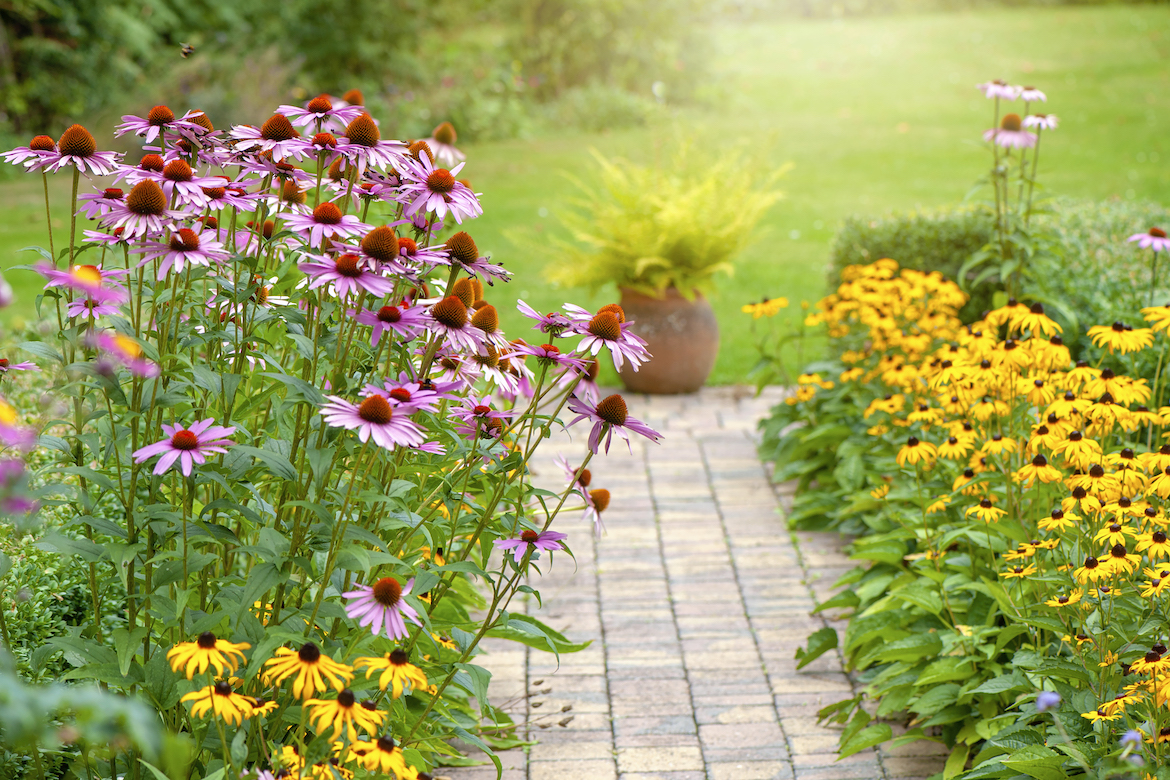 Thumbnail for Full-Sun Plants Require Over 6 Hours of Sunlight a Day—Here Are 6 To Know About
