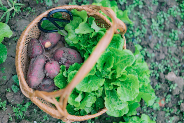 Sweet Potatoes Are Surprisingly Easy (and Highly Rewarding) To Grow—Here's How, in 4 Steps