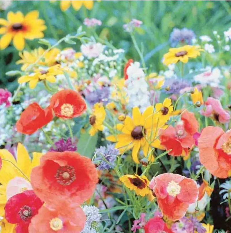 easy-to-grow wildflowers