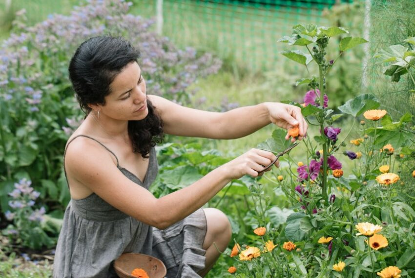 6 Easy-To-Grow Wildflowers for a Garden Bursting With Color