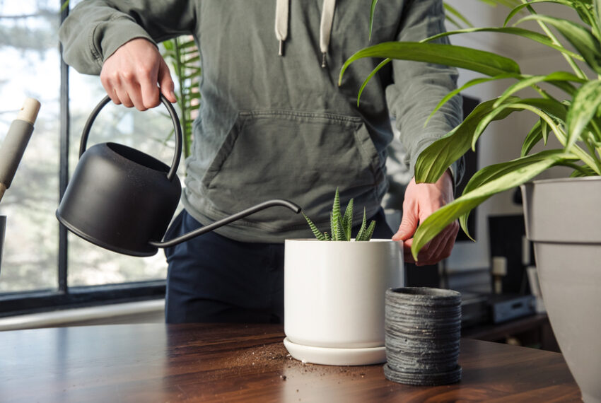 What It Means When Your Houseplant Starts Growing Mushrooms