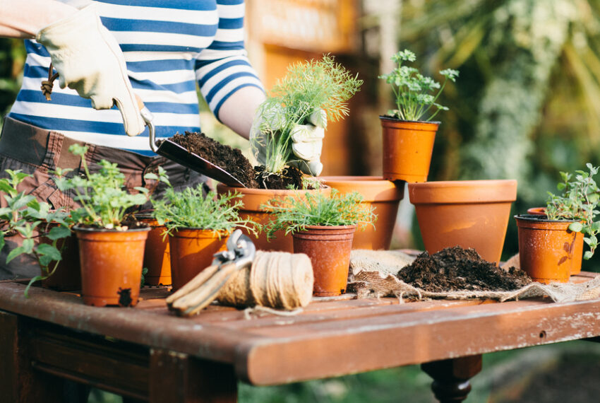 7 Best Containers for Growing Your Own Herbs