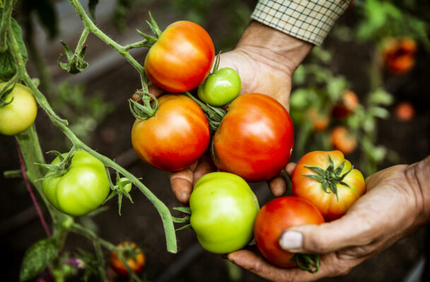 How To Grow Tomatoes Properly, According to a Gardening Expert