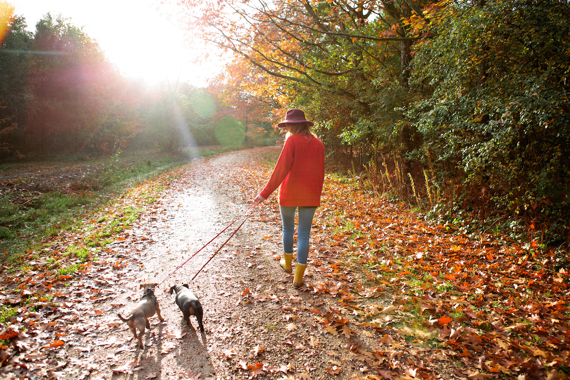 The Finest Fall Equinox Ritual for Your Zodiac Signal